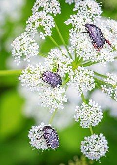 Flowers, Beetle, Bug, Petals, Plant, Floral, Flora