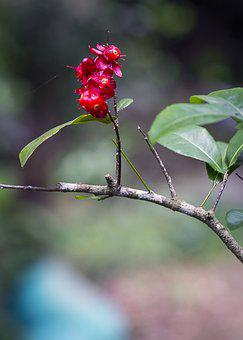 Flowers, Leaves, Foliage, Plant, Wild, Branch, Beetle