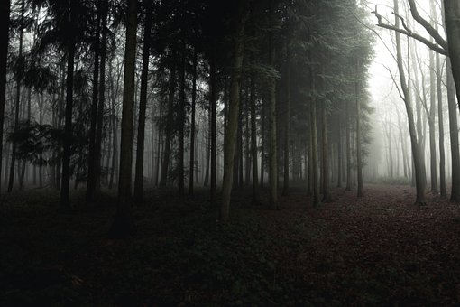 Forest, Dark, Dense, Trees, Gray, Black And White