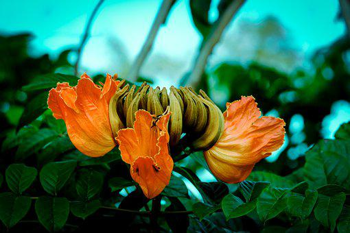 Flowers, Petals, Bush, Tree, Botany, Floral, Leaves