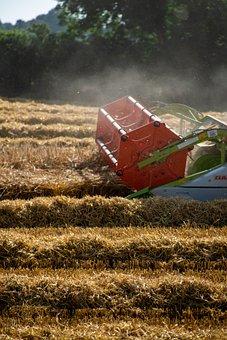 Harvest, Cereals, Barley, Combine Harvester