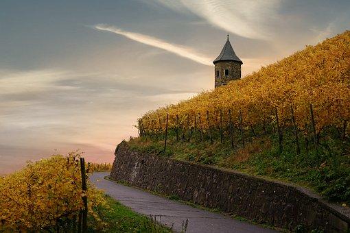 Vineyard, Leaves, Agriculture, Road, Farm, Harvest