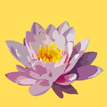 Flower, Petals, Lotus, Plant, Leaves, Floral, Flora