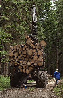 Timber Harvesting, Tractor, Forwarder, Forest, Trees