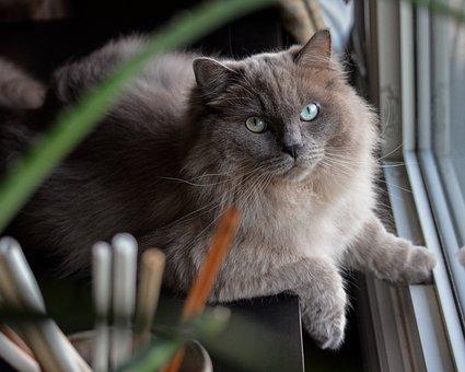 Cat, Pet, Feline, Animal, Lying, Whiskers, Fur, Kitty