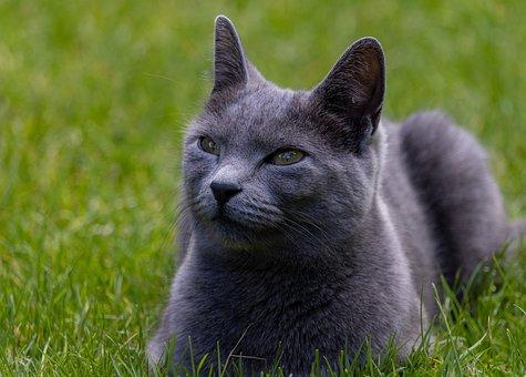 Cat, Pet, Feline, Animal, Fur, Whiskers, Kitty, Mammal