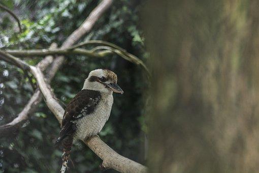 Bird, Beak, Giggling Cook, Ornithology, Animal, Zoo