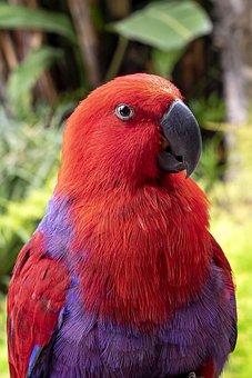 Parrot, Bird, Animal, Plumage, Feathers, Beak, Bill
