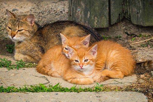 Kittens, Cat, Pet, Feline, Animal, Fur, Whiskers, Kitty