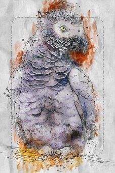 Parrot, Bird, Animal, Exotic, Gray, Nature, Wildlife