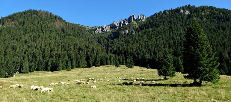 Western Tatras, Mountains, Chochołowska Valley, Tourism
