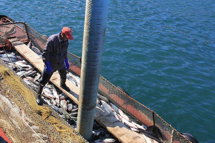 Fish, Fishing, Kurile Islands, Etorofu, Sea