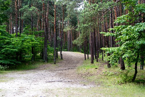 Forest, Tree, Nature, View, Summer, Landscape, Way