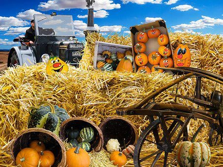 Autumn, Pumpkins, Harvest, Decorative Squashes