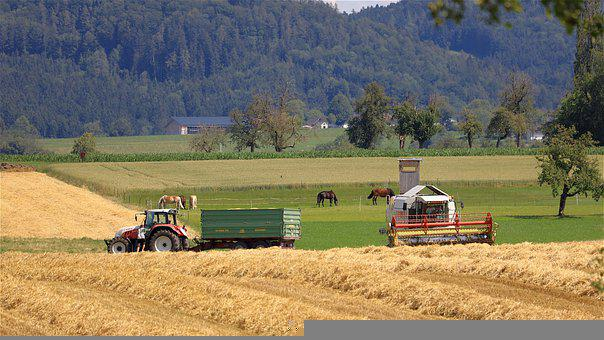 Field, Barley, Tractor, Farm, Horses, Agriculture