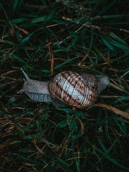 Snail, Mollusk, Shell, Animal, Fauna, Damp, Green