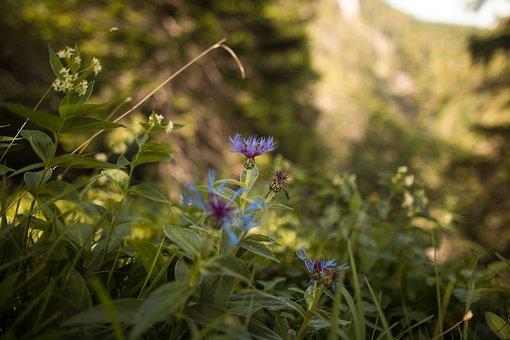 Wildflowers, Meadow, Nature, Garden, Flowers