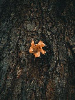 Flower, Petals, Bark, Tree, Log, Trunk, Sad, Freepic