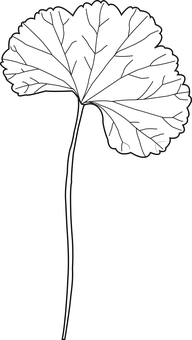 Leaf, Plant, Environment, Green, Nature, Tree, Earth