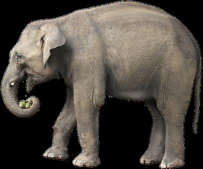 Elephant, Animal, Mammal, Trunk, Tusk, Large Animal