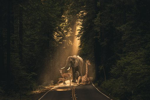 Nature, Animals, Forest, Route, Sunset, Rays Of Light