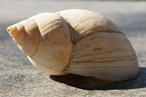 Snail, Mollusk, Shell, Spiral, Gastropod