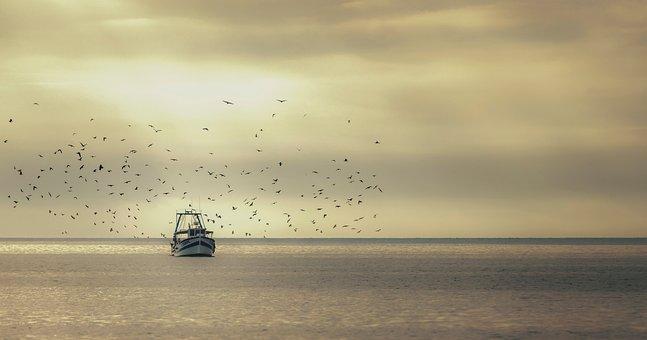 Boat, Sea, Sunrise, Travel, Birds, Flock, Ocean, Ship
