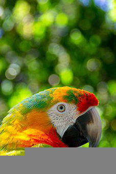 Parrot, Bird, Perched, Animal, Colorful, Feathers