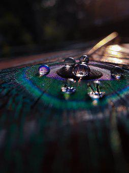 Peacock Feather, Peafowl, Water Drops, Macro, Eyespots