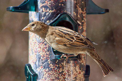 Wren, Bird, Perched, Feeders, Animal, Feathers, Plumage