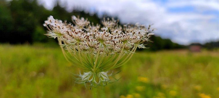 Flower, Petals, Buds, Flora, Botany, Bloom, Blossom