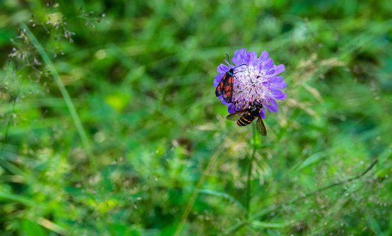 Bee, Insects, Pollinate, Pollination, Flower