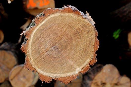Wood, Bark, Log, Robinia Pseudoacacia