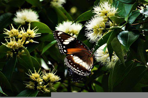 Butterfly, Insect, Wings, Wildlife, Flowers, Pollen