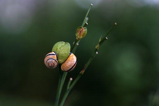 Snails, Animals, Plant, Shell, Snail Shell, Mollusk