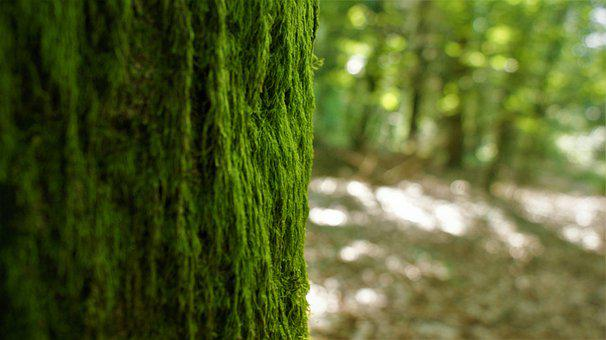 Tree, Trunk, Moss, Bark, Wood, Old Tree, Forest, Nature