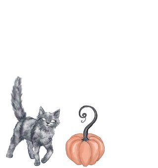 Cat, Pumpkin, Halloween, Autumn, Spooky, Trick-or-treat
