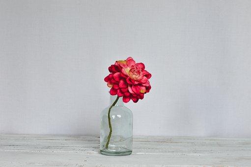 Flower, Petals, Bottle, Minimalist, Blossom, Colorful