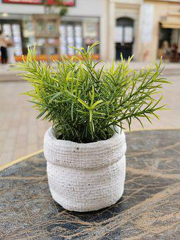 Herbs, Potted Plant, Houseplant, Home Decor