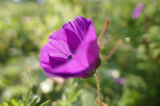 Blossom, Bloom, Flower, Purple, Nature, Flora, Plant