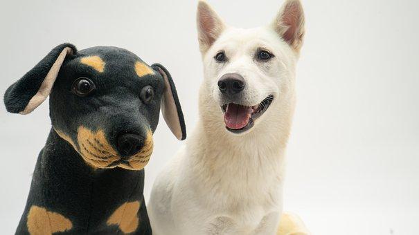 Dog, Stuffed Toy, Pet, Animal, Canine, Adorable, 강아지