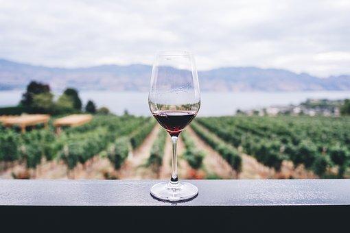 Wine, Vineyard, Viticulture, Wineglass