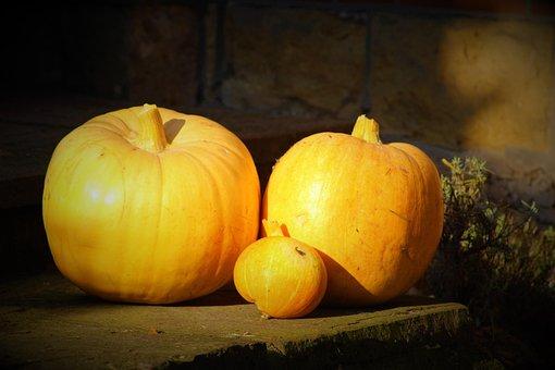 Pumpkin, Vegetables, Fresh, Autumn, Halloween, Harvest