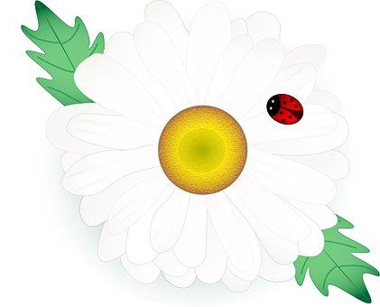 Daisy, Flower, Ladybug, Insect, Beetle, Chamomile