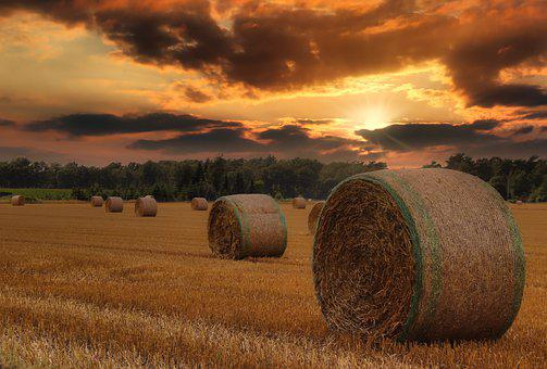 Field, Hay Bales, Straw Bales, Hay, Agriculture