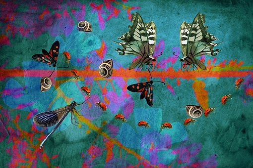 Butterflies, Ladybug, Wings, Snails, Dragonfly, Insects