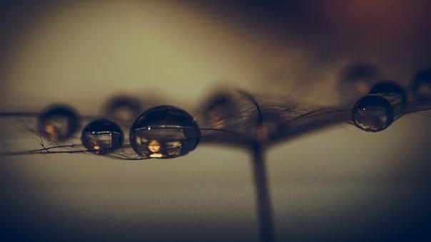 Water Drops, Dewdrops, Mona Lisa, Macro