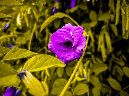 Flower, Morning Glory, Botany, Nature, Garden, Spring