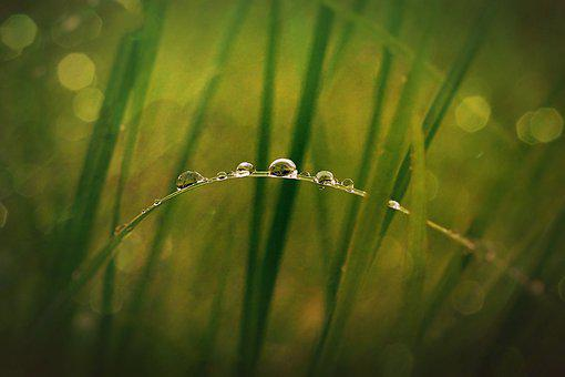 Grass, Drops, Water, Bokeh Lights, Plants, Meadow, Gras