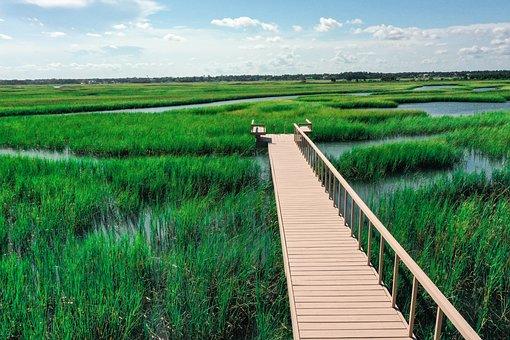 Marsh, Bayou, Wetland, Bog, Swamp, Nature, Landscape
